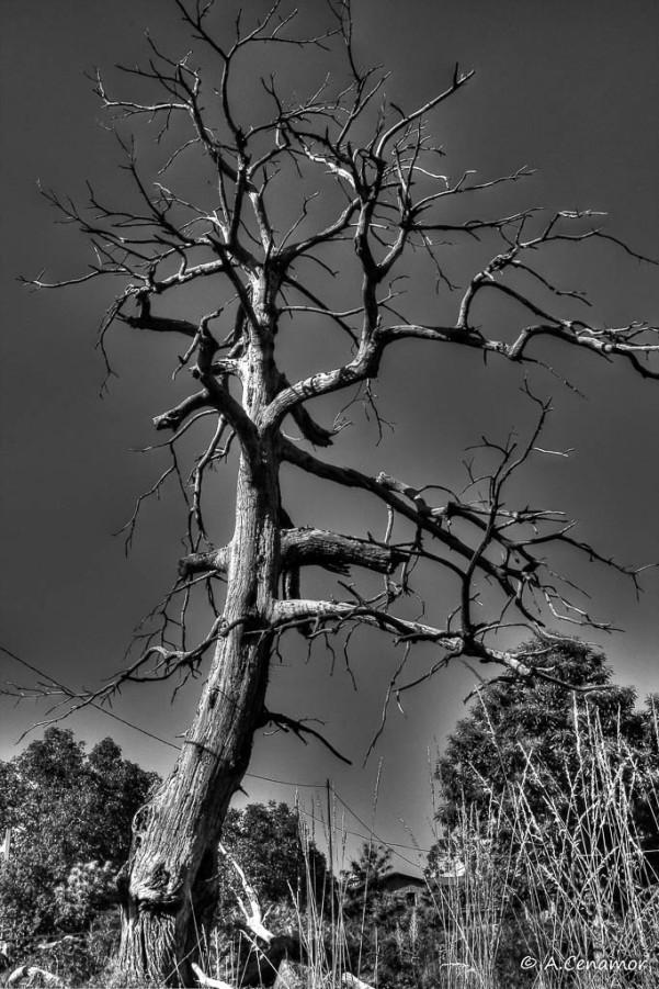 Árbol desolado
