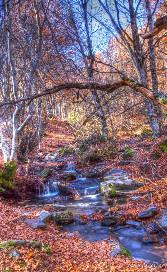 Arroyos entre las hojas