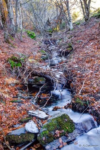 Arroyos entre las hojas II