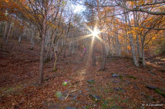 Luz entre las hayas II