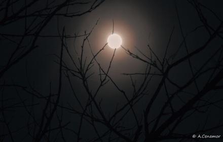 Arañando a la luna