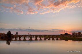 Puente de Palmas II