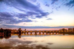 Puente de Palmas III