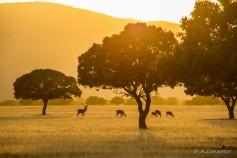 Raña: Serengueti Español I