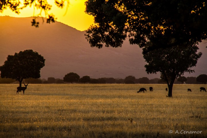 Raña: Serengueti Español II