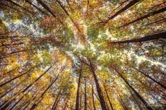 Cobijo del bosque